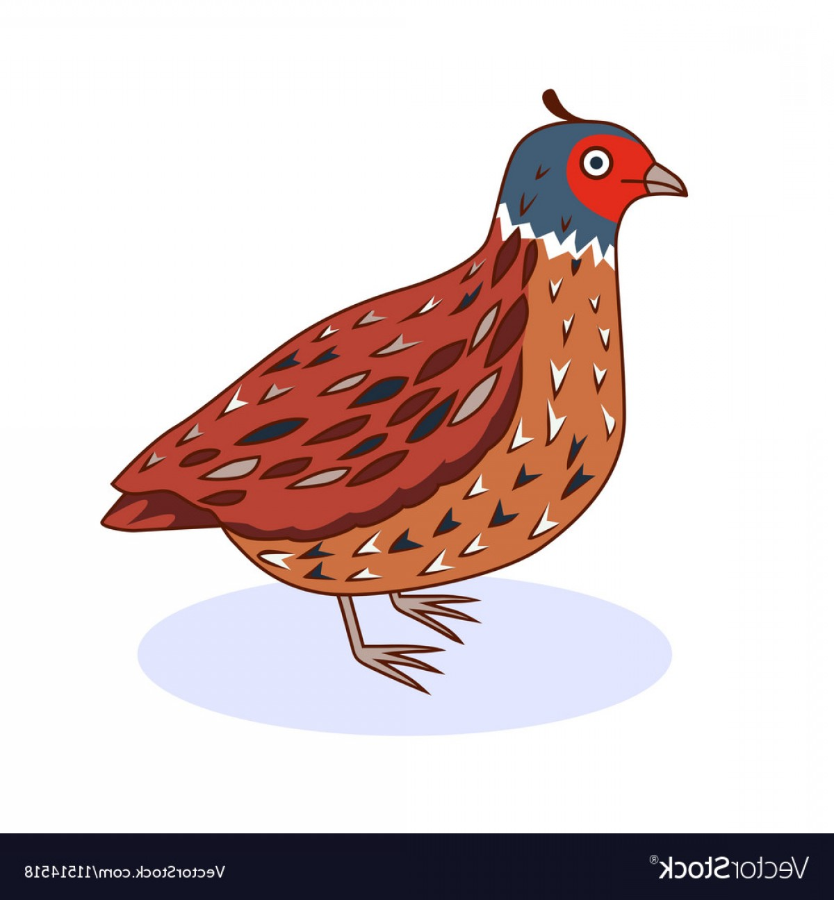 Quail Vector Art: A Bird California Quail Vector