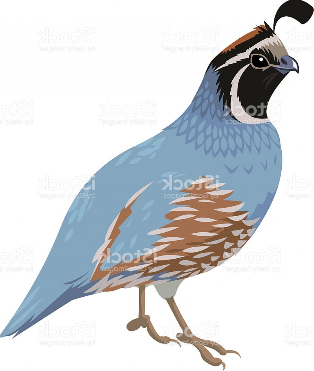 Quail Vector Art: A Blue And Brown Cartoon Of A Quail Bird Gm