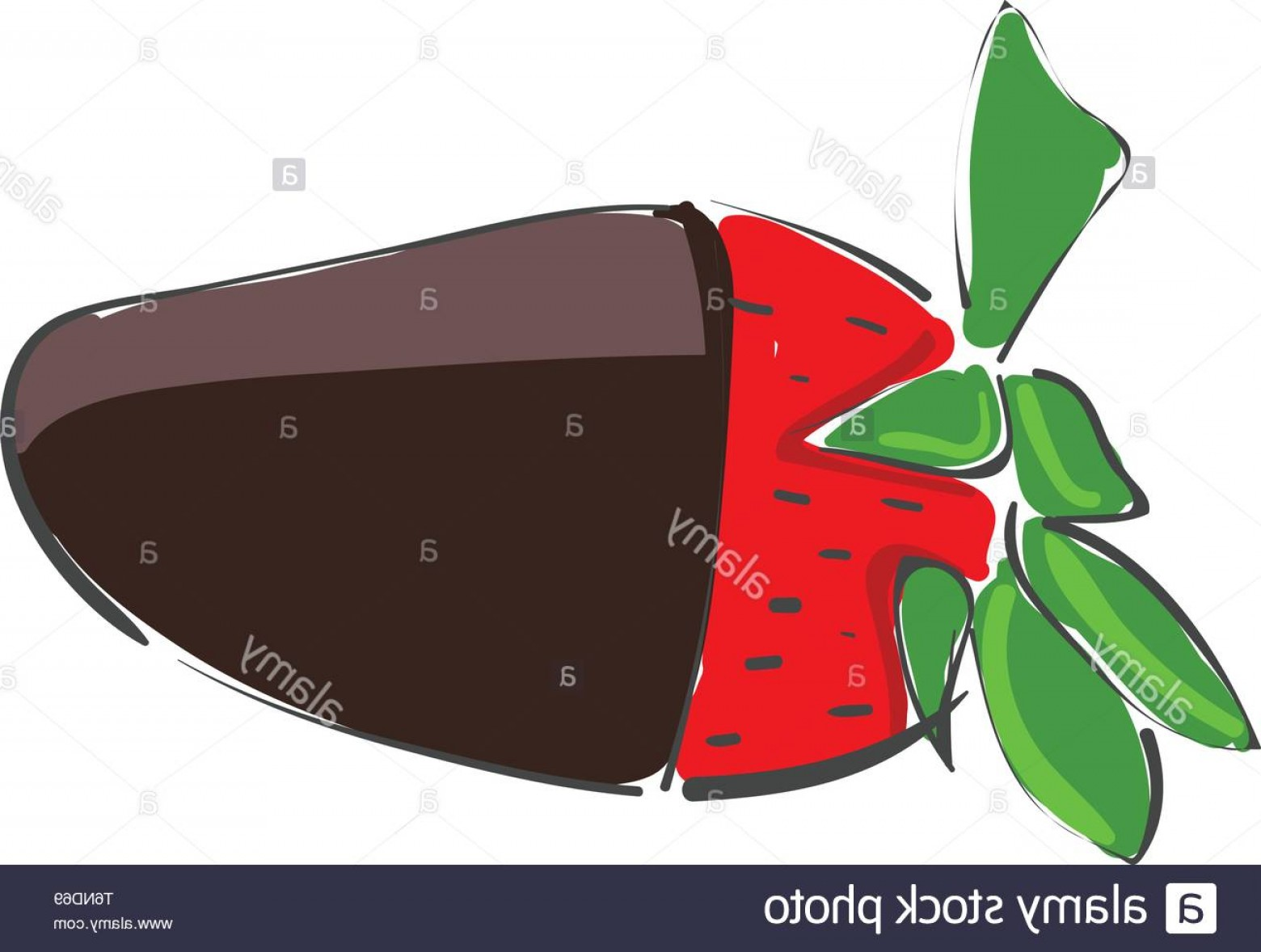Chocolate Vector Plant: A Fresh Strawberry Which Is Dipped In Dark Chocolate Vector Color Drawing Or Illustration Image