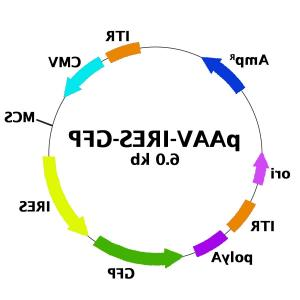 PEGFP Vector Map: Aav Bicistronic Expression Vector Ires Gfp