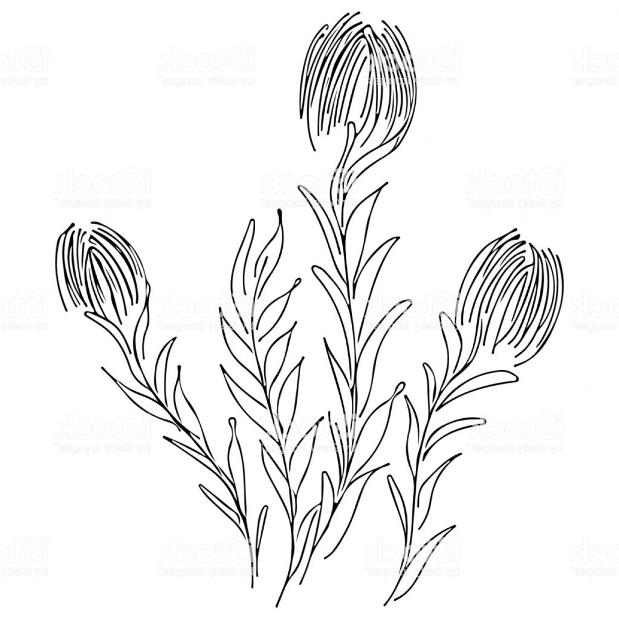 Wildflowers Outline Vector: Abstract Wildflowers Outline Icon Isolated On White Background Hand Drawn Vector Gm