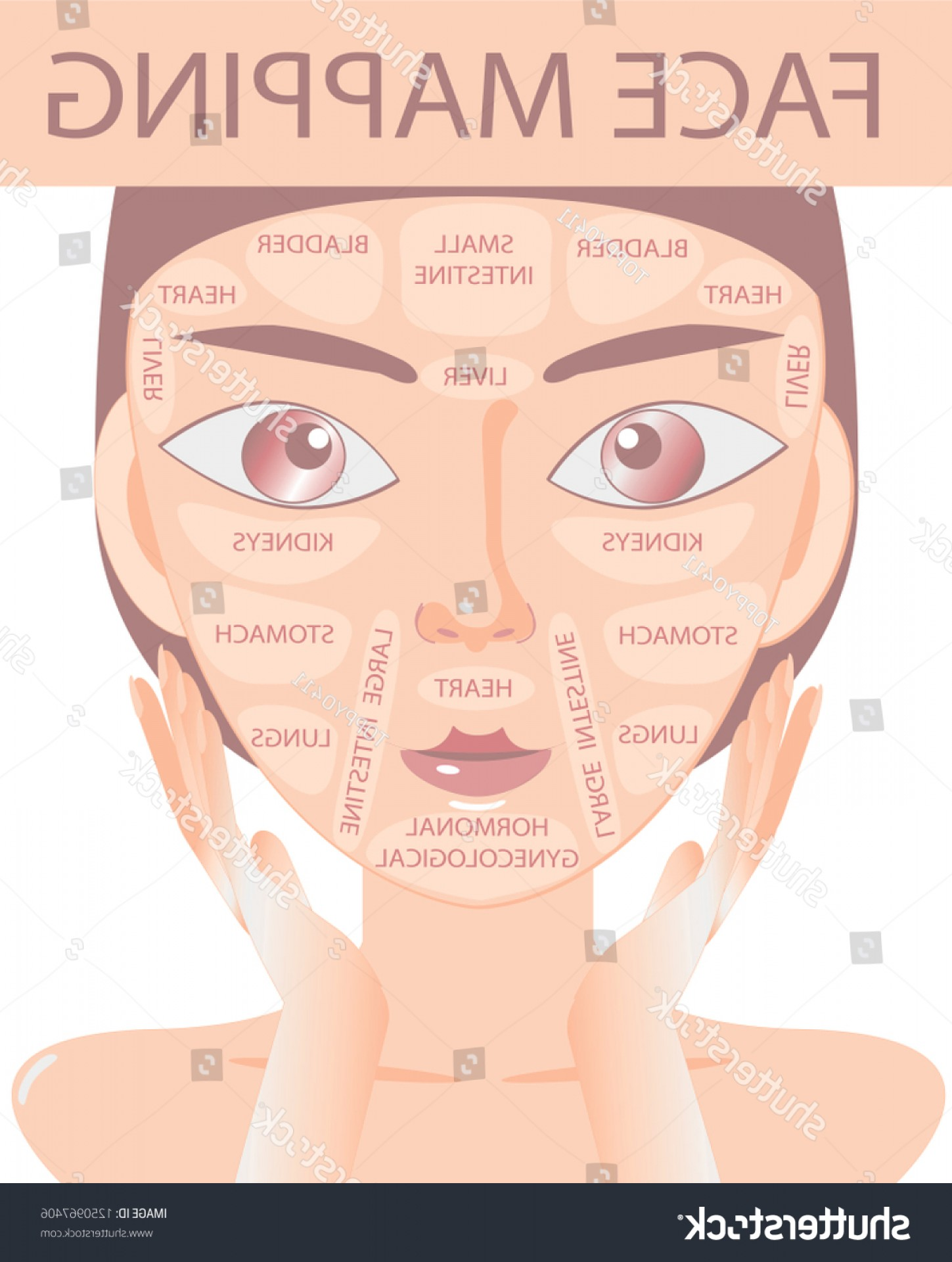 Vector Face Mapping: Acne Face Map Vector Illustration Beauty