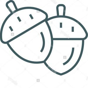 Acorn Outline Vector: Acorn Line Icon Vector Acorn Outline Sign Concept Symbol Flat Illustration Image