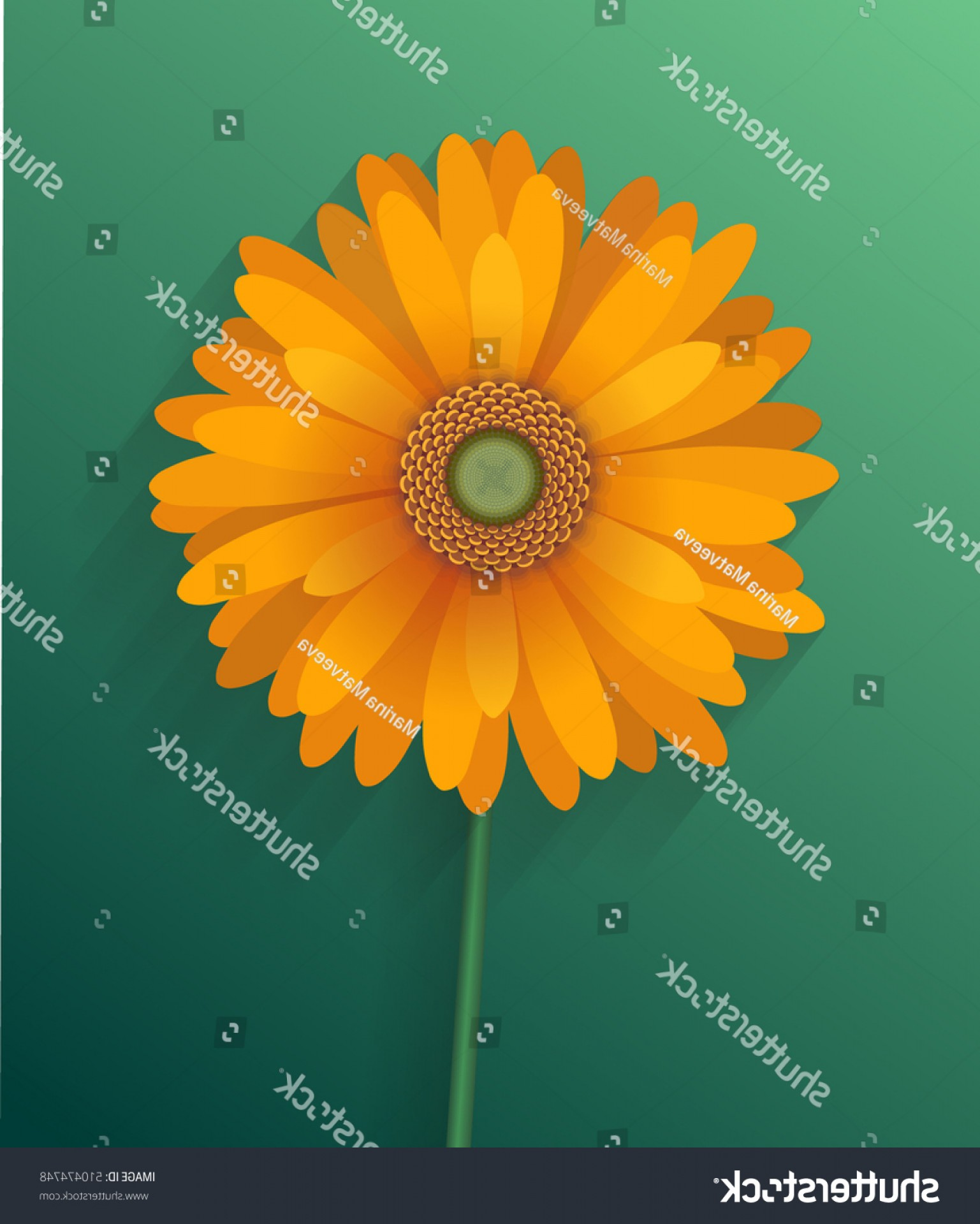 Orange Gerber Daisy Vector: Adorable Vector Illustration Orange Gerber Daisy On
