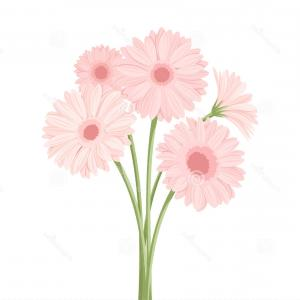 Orange Gerber Daisy Vector: Pretty Stock Illustration Beautiful Yellow Gerber Daisy