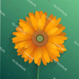 Orange Gerber Daisy Vector: Beautiful Hd Orange Gerbera Daisy Vector Cdr