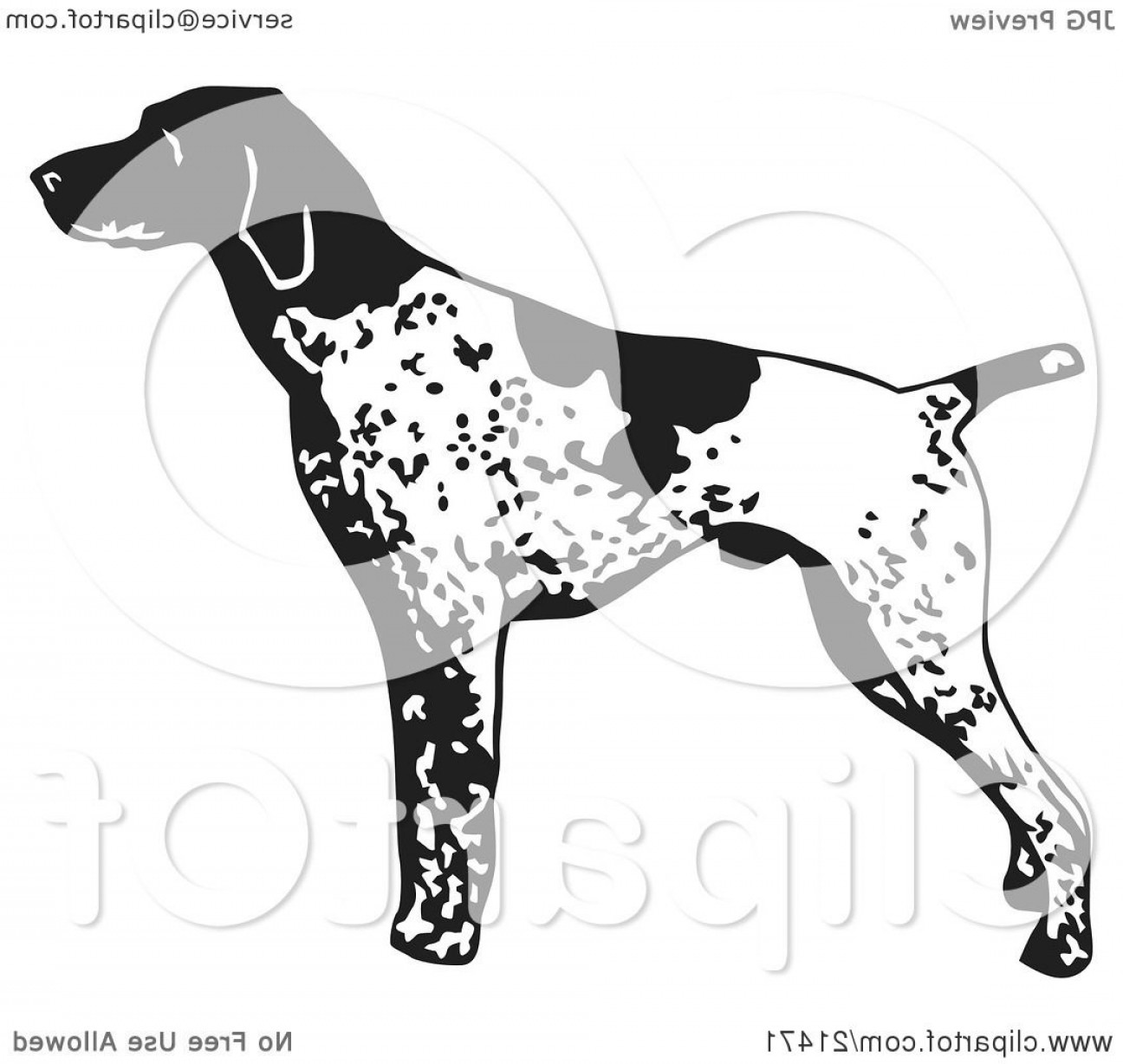 Pointer Dog Vector: Alert English Pointer Dog Standing And Pointing In Profile Facing Right