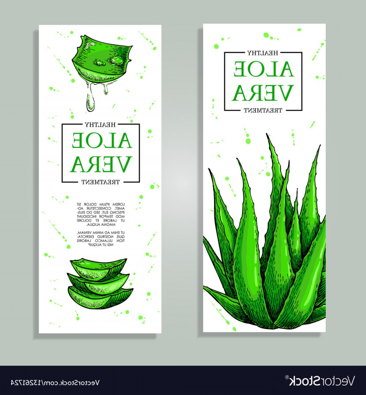 Aloe Vector Graphics: Aloe Vera Hand Drawn Banner Natural Vector