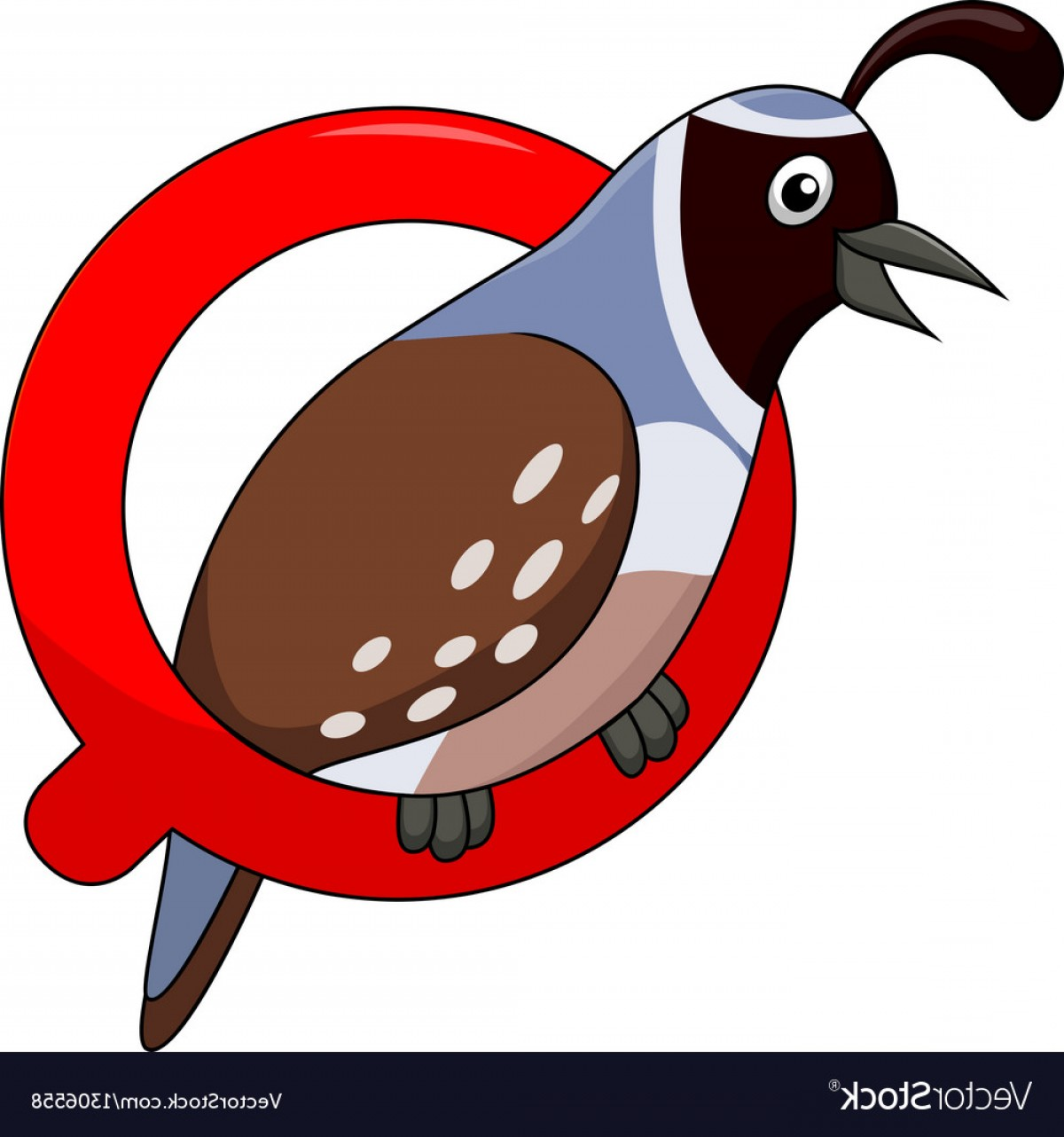 Quail Vector Art: Alphabet Q With Quail Cartoon Vector