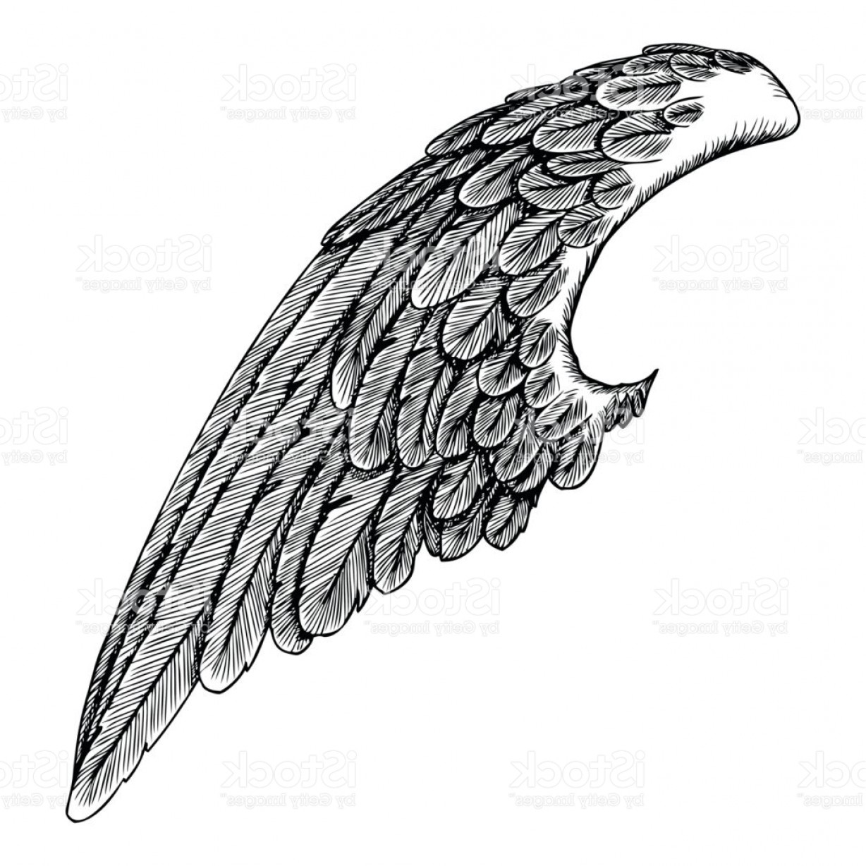 Falcon Wing Vector Art: Angel Wing Illustration On White Background Body Tattoo Concept Art Gm