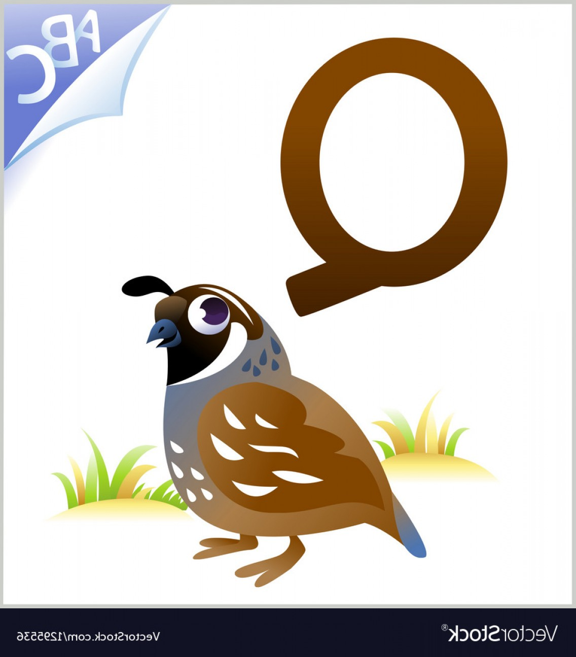 Quail Vector Art: Animal Alphabet For The Kids Q For The Quail Vector