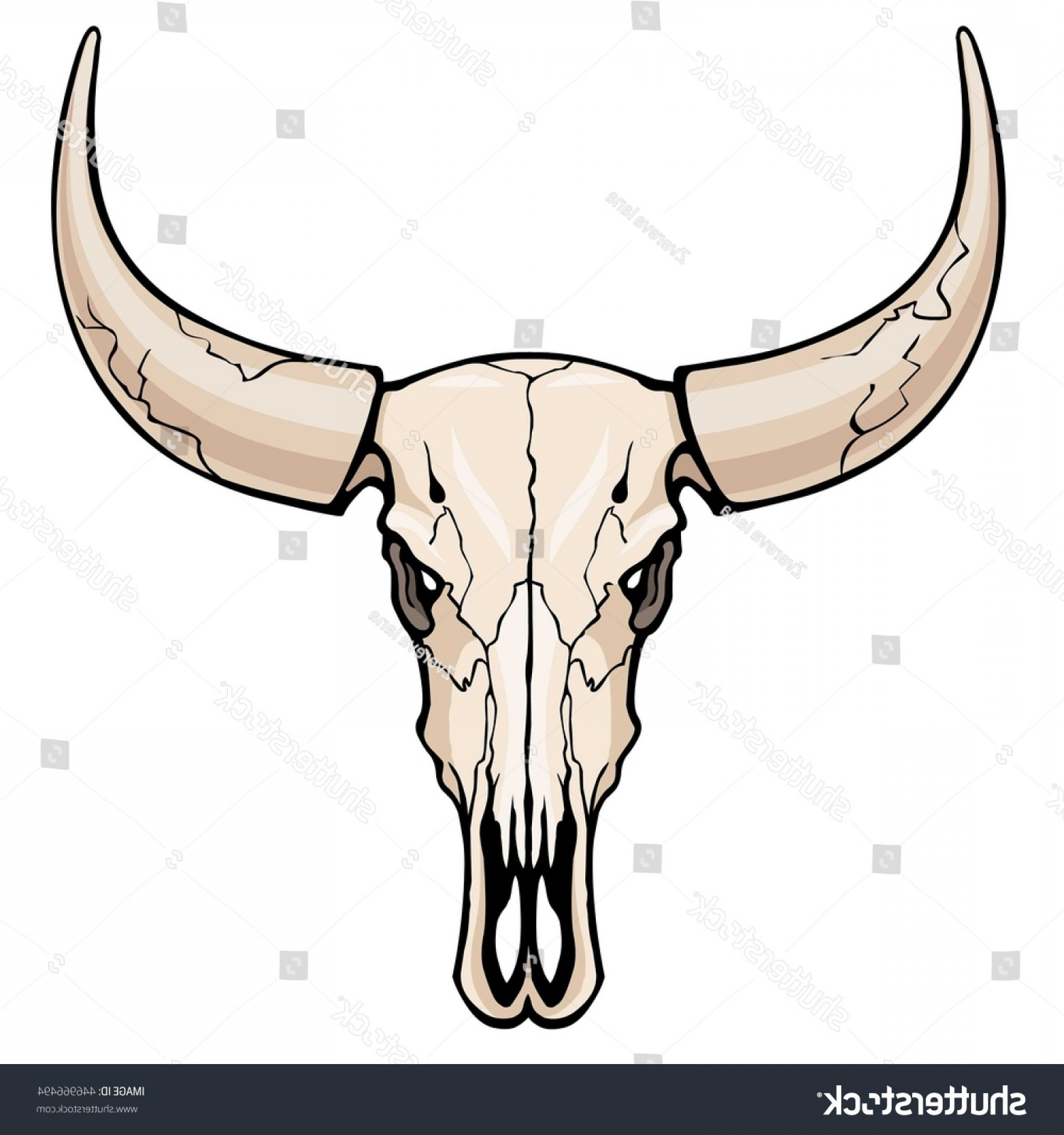 Longhorn Skull Vector: Animation Skull Bull Color Drawing Isolated