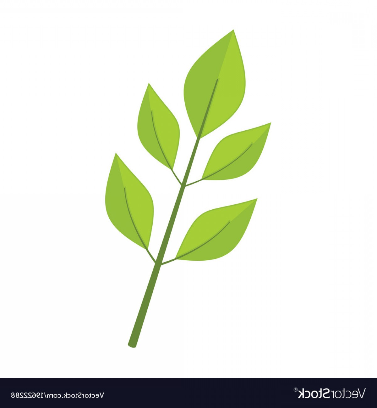 Vector Leaf Graphicd: Ash Tree Leaves Graphic Vector