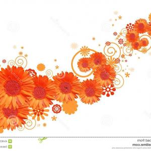 Orange Gerber Daisy Vector: Gorgeous Photobackground Of Colorful Beautiful Flowers Gerber Beautiful Red Gerber Daisy