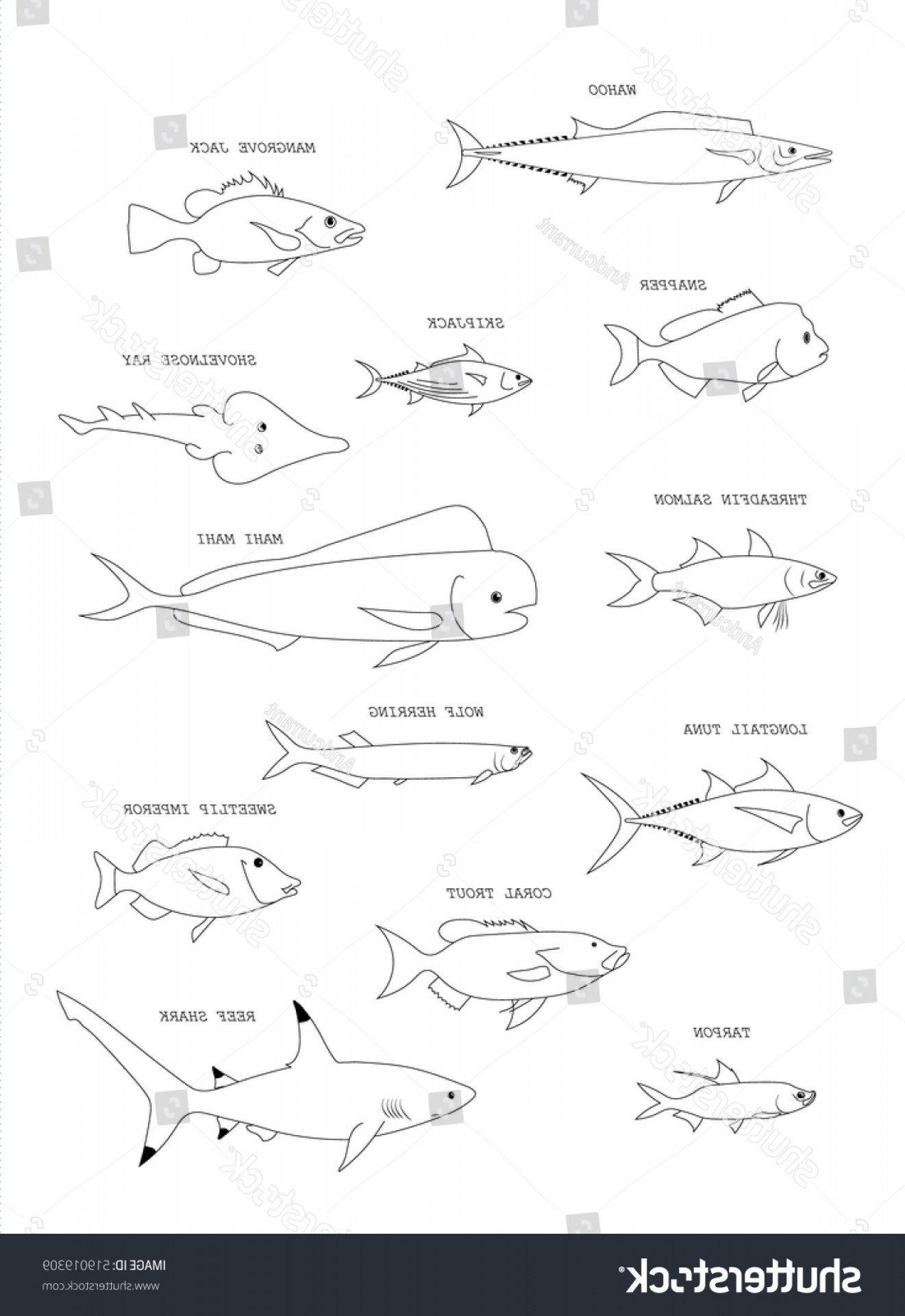 Mahi Mahi Outline Vector Images: Australian Fish Mahi Reef Shark Wolf