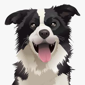 Australian Shepherd Black And White Vector: Australian Shepherd Dog Breed Pet Puppy Isolated Head Face Image