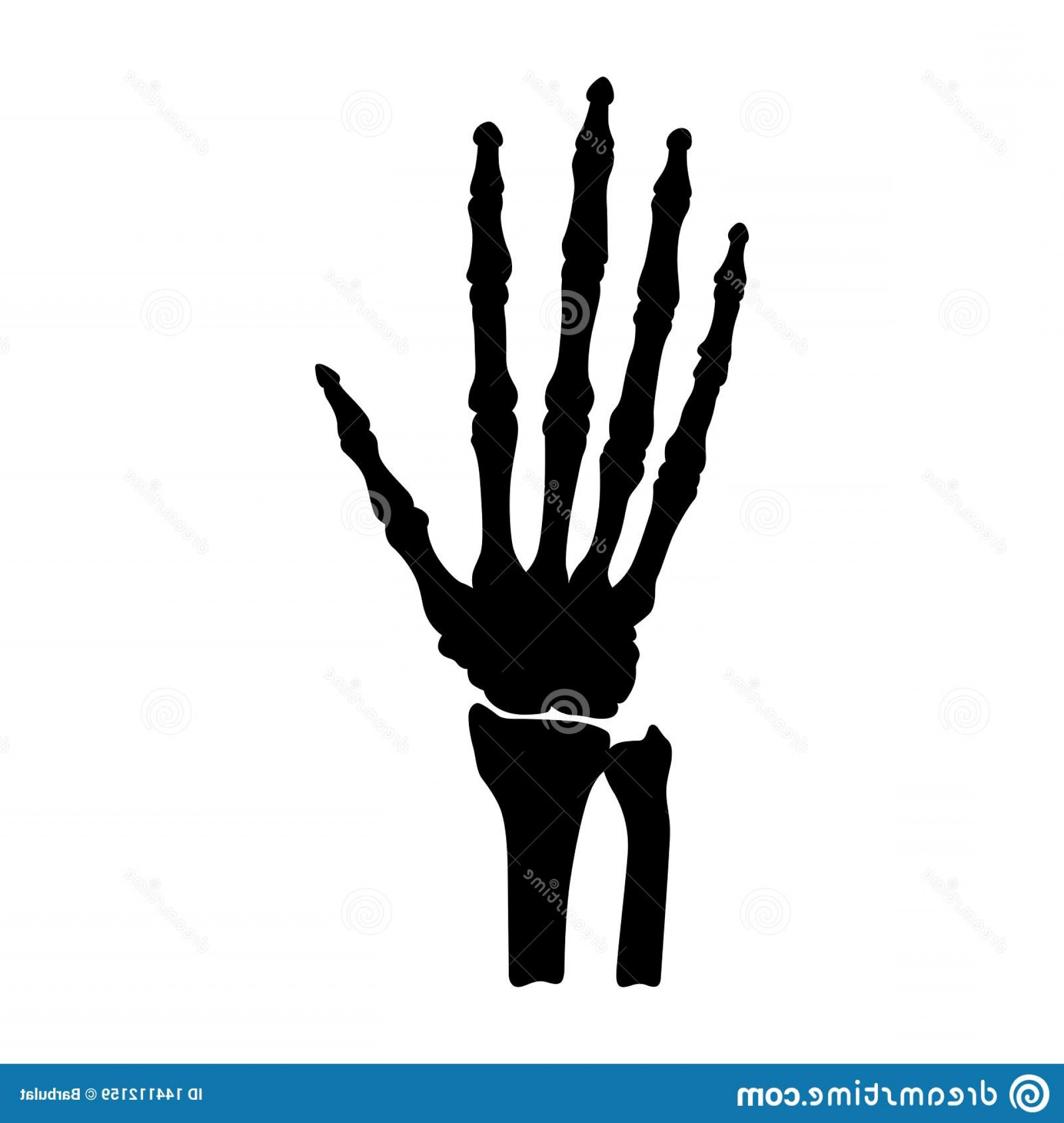 Hi Res Vector Human Skeleton: Available High Resolution Several Sizes To Fit Needs Your Project Human Hand Bones Anatomy Image