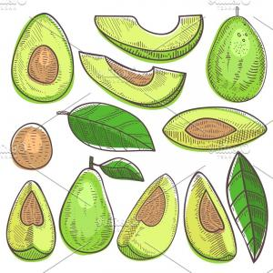 Avocado Vector: Avocado Vector Green Organic Food