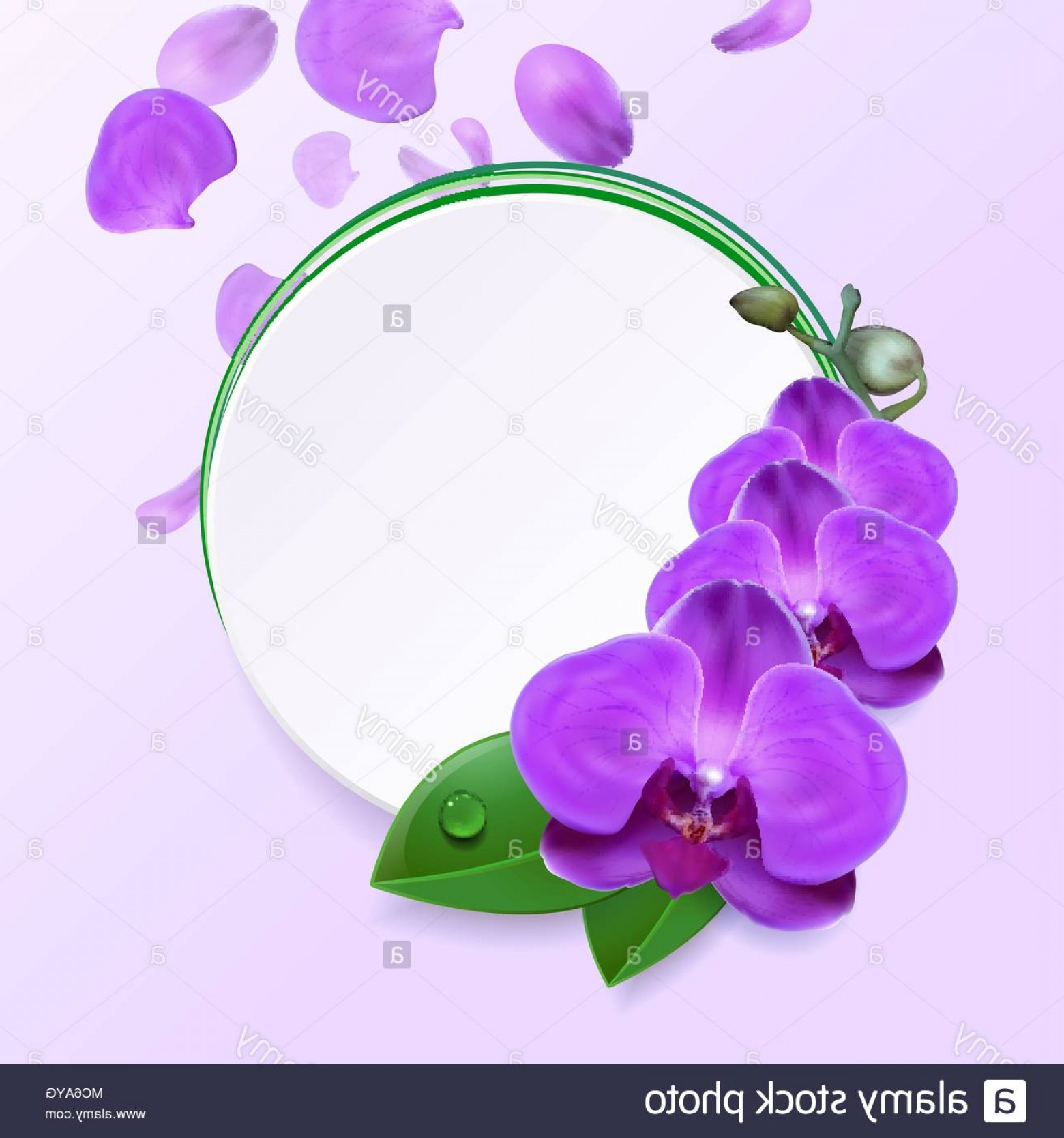 Purple Orchid Vector: Banner With Purple Orchids On A Light Background Image