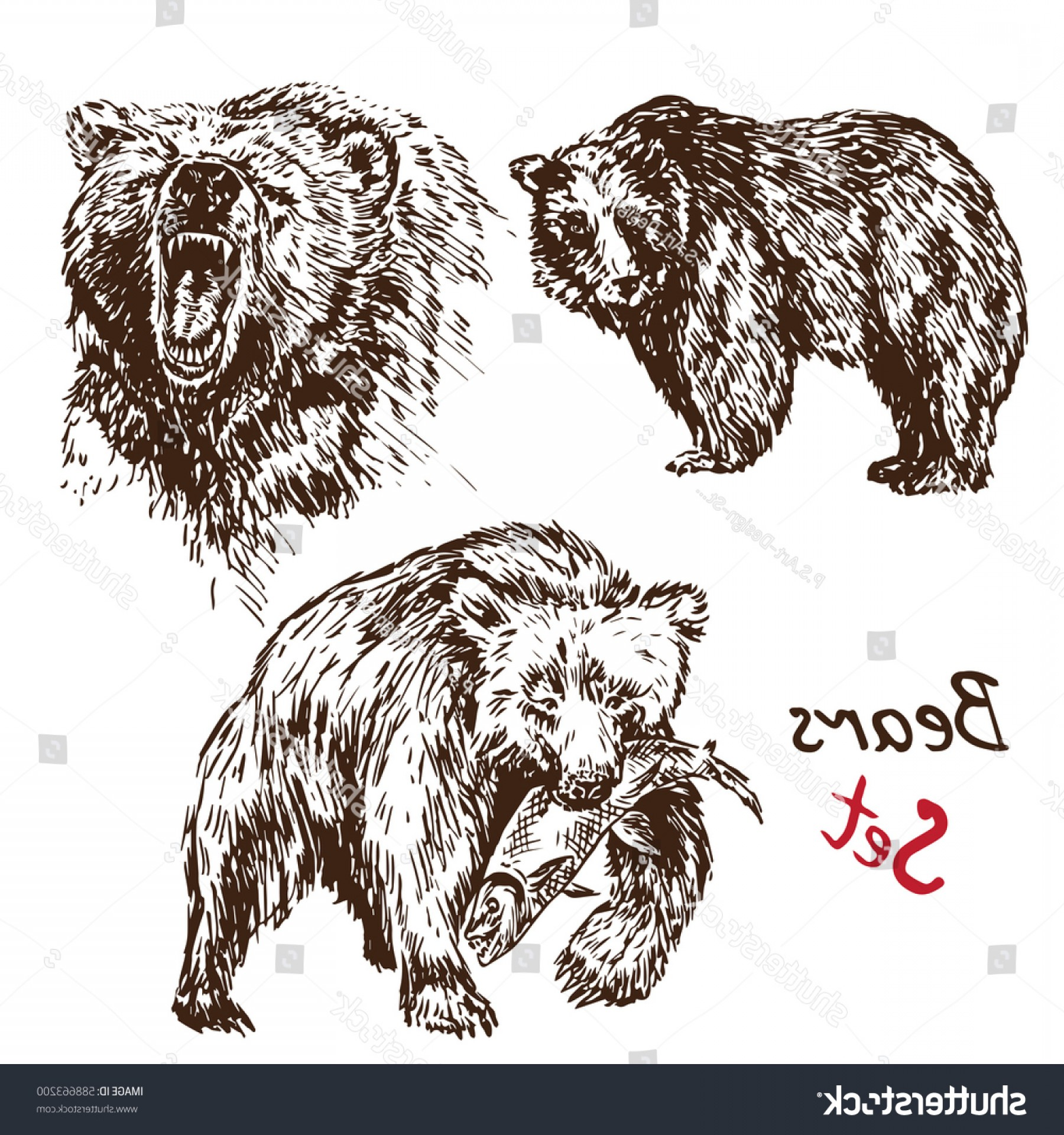Vector Art Bear With Salmon: Bears Set Sanding Growling Hunting Salmon