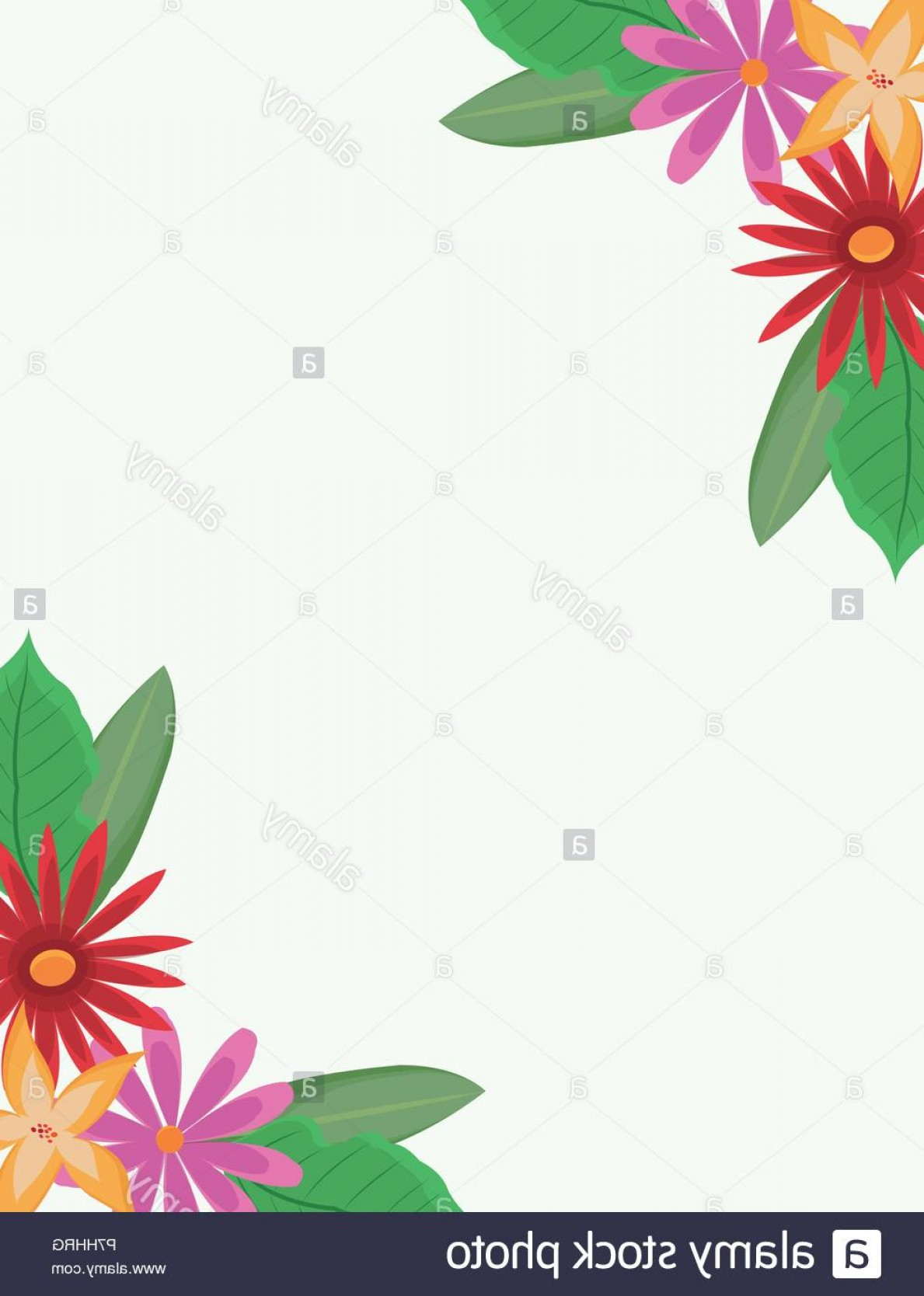 Beautiful Flowers Vector Graphic: Beautiful Flowers Frame Over White Background Vector Illustration Graphic Design Image