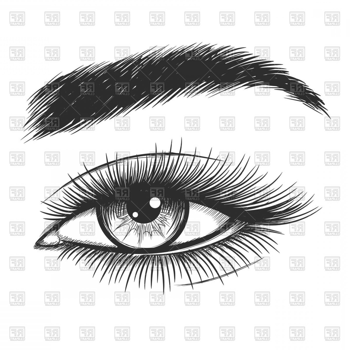 Top Eye Lashes Vector: Beautiful Lady Eye Hand Drawn Vector Clipart
