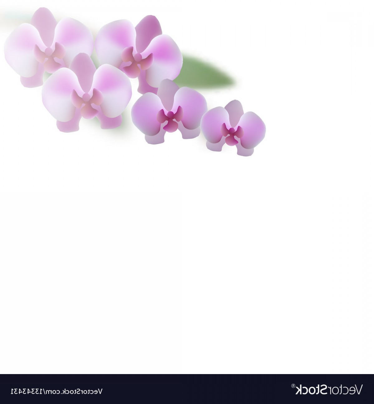 Purple Orchid Vector: Beautiful Purple Orchid Flowers And Leaves Vector