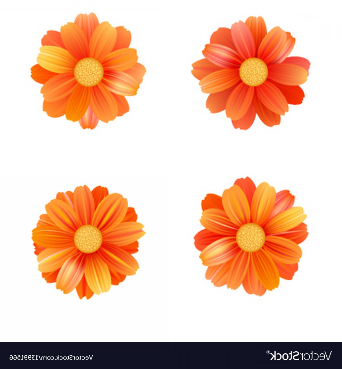 Orange Gerber Daisy Vector: Beautiful Set Of Isolated Yellow Gerbera Or Daisy Vector