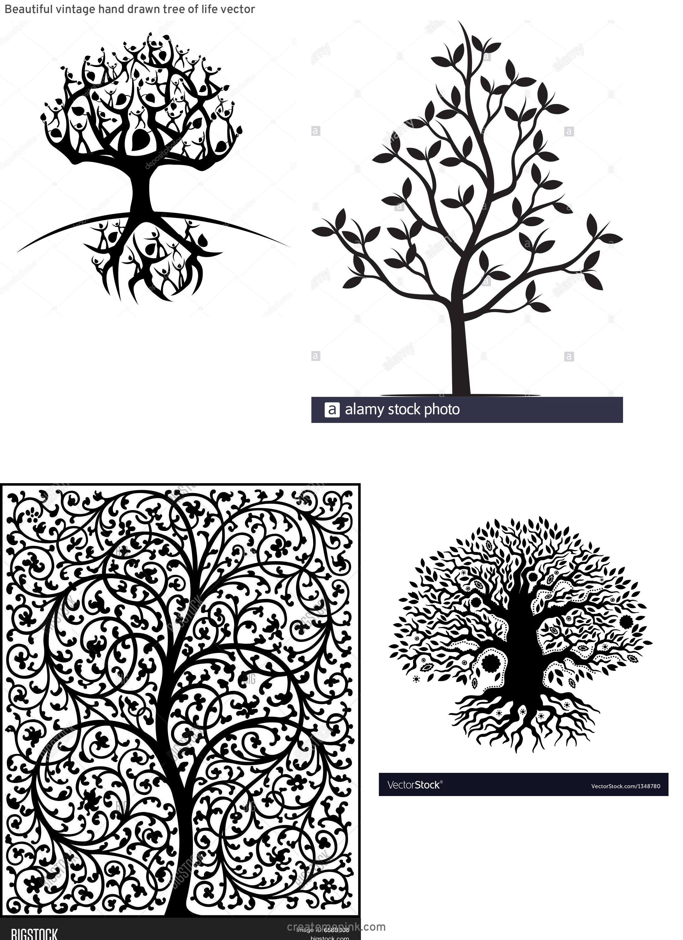Vector Images Black Tree Of Life: Beautiful Vintage Hand Drawn Tree Of Life Vector