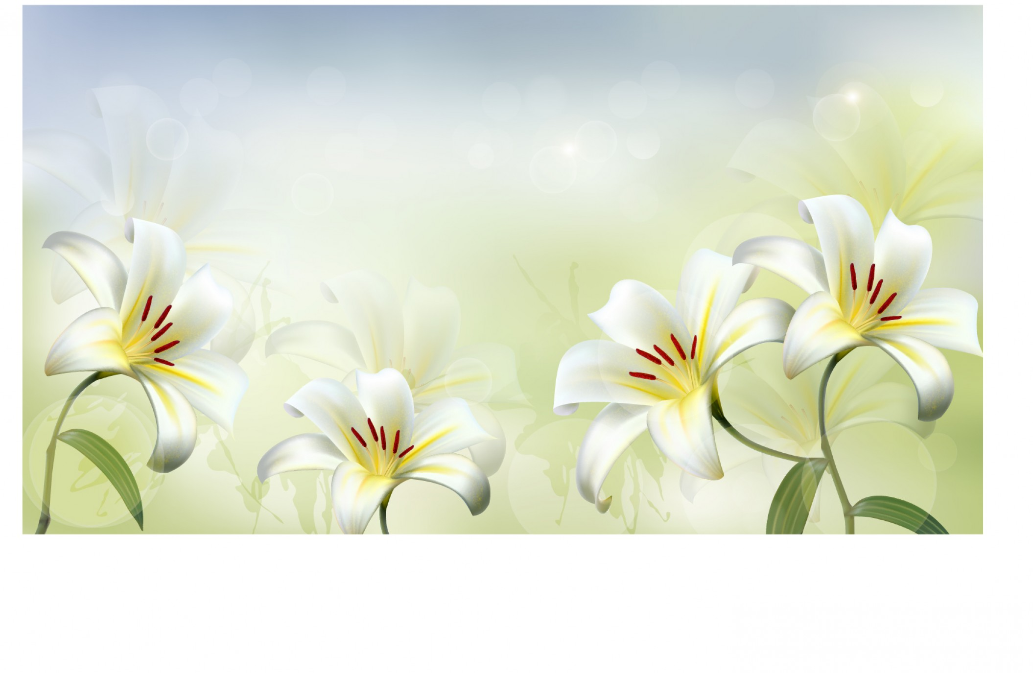 Beautiful Flowers Vector Graphic: Beautiful White Flower Vector Background