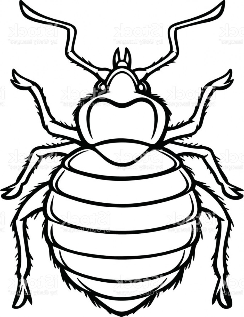 Bug Vector Art: Bed Bug Graphic Illustration Gm