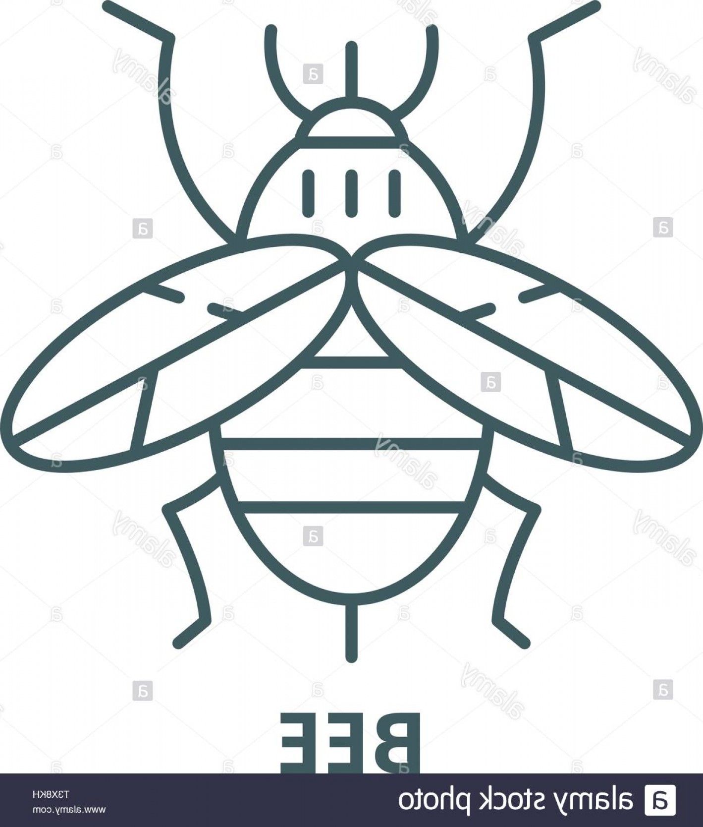 Bee Outline Vector: Bee Line Icon Vector Bee Outline Sign Concept Symbol Flat Illustration Image