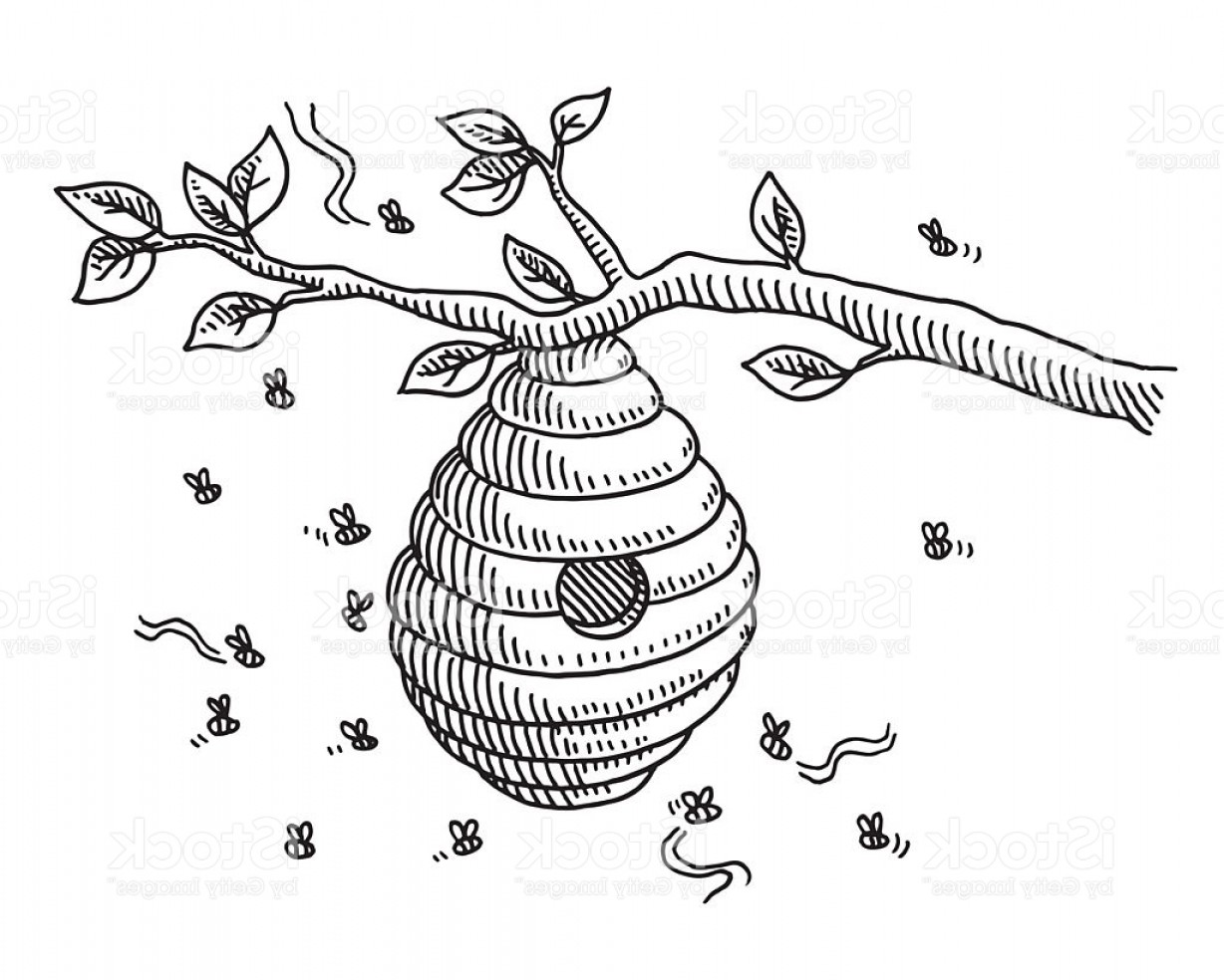 Bee Drawing Vector: Beehive On Branch Drawing Gm
