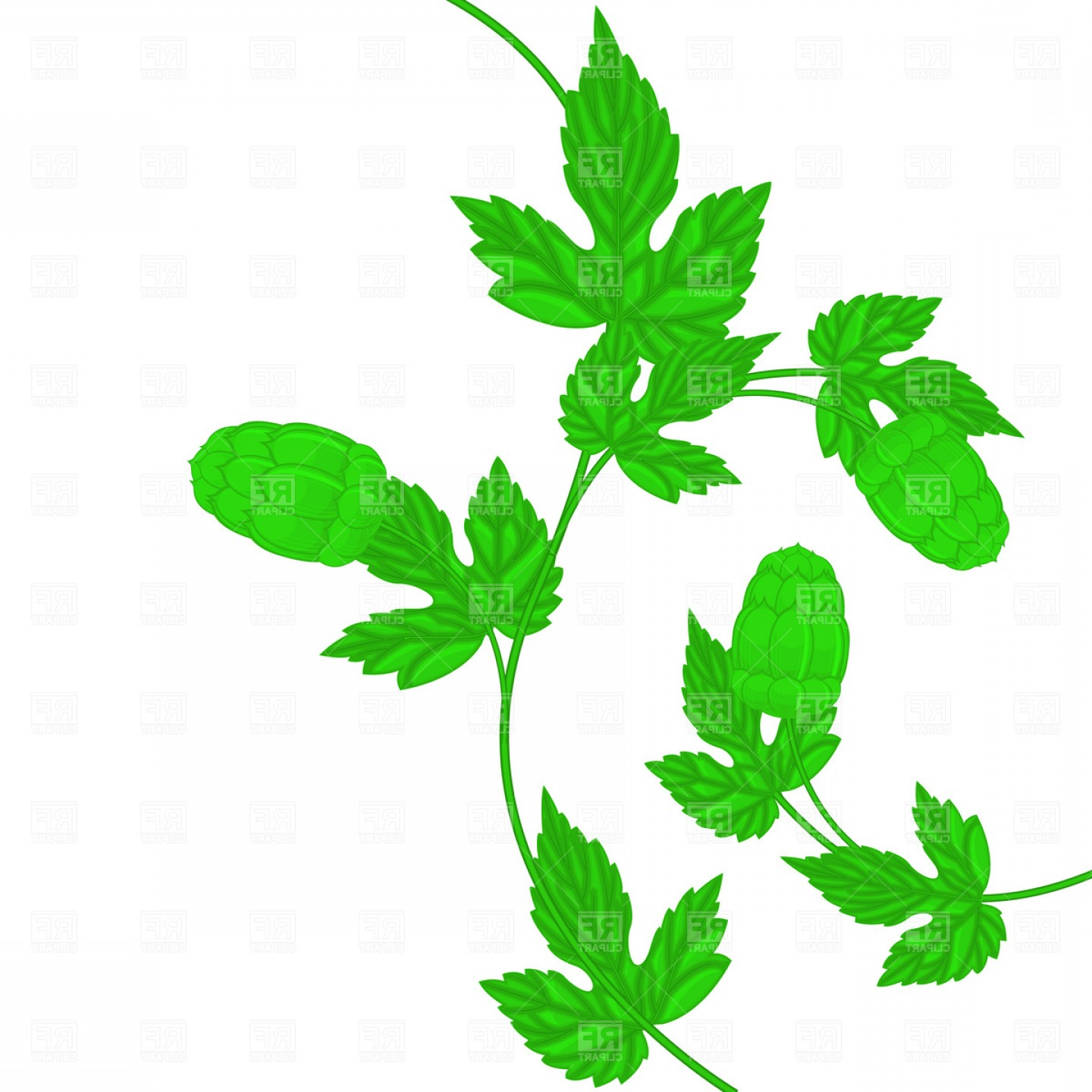 Beer Hops Vector: Beer Hop Cone And Leaf Vector Clipart