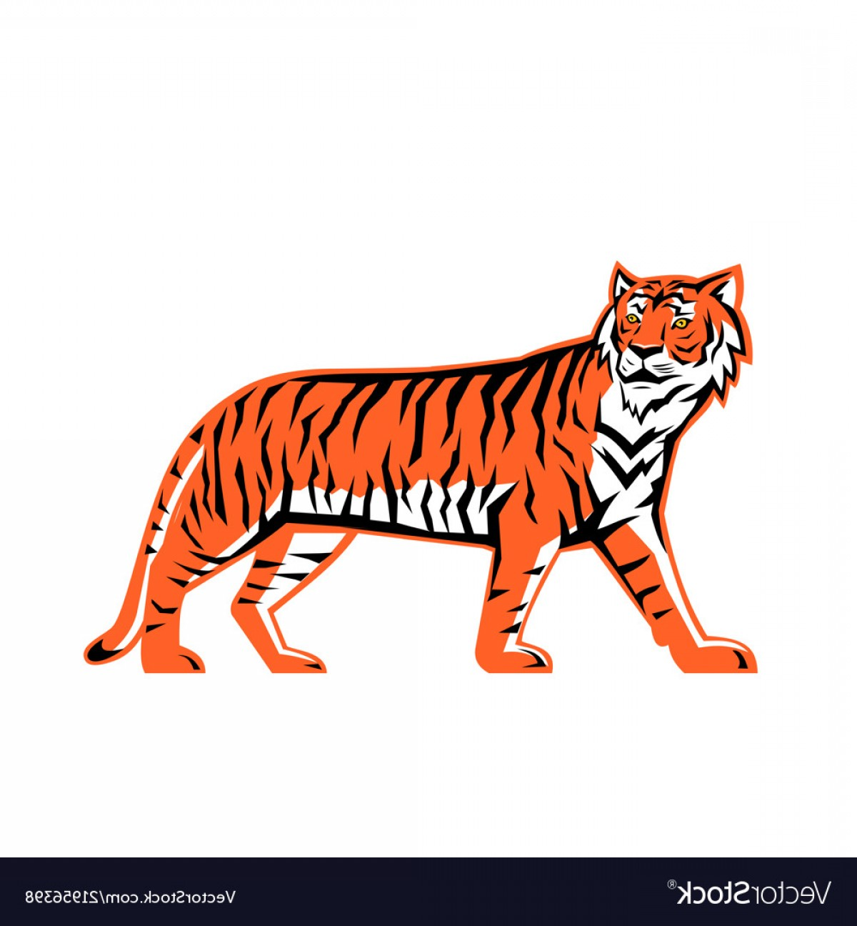 Full Body Tiger Roaring Vector: Bengal Tiger Full Body Mascot Vector