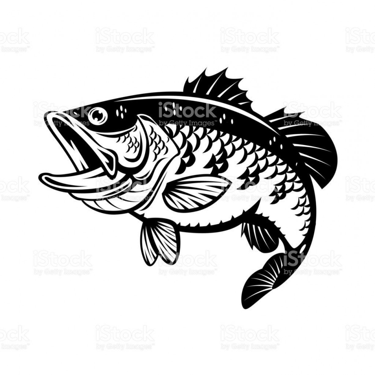 Largemouth Bass Silhouette Vector: Best Free Graphic Bass Fish Vector Images