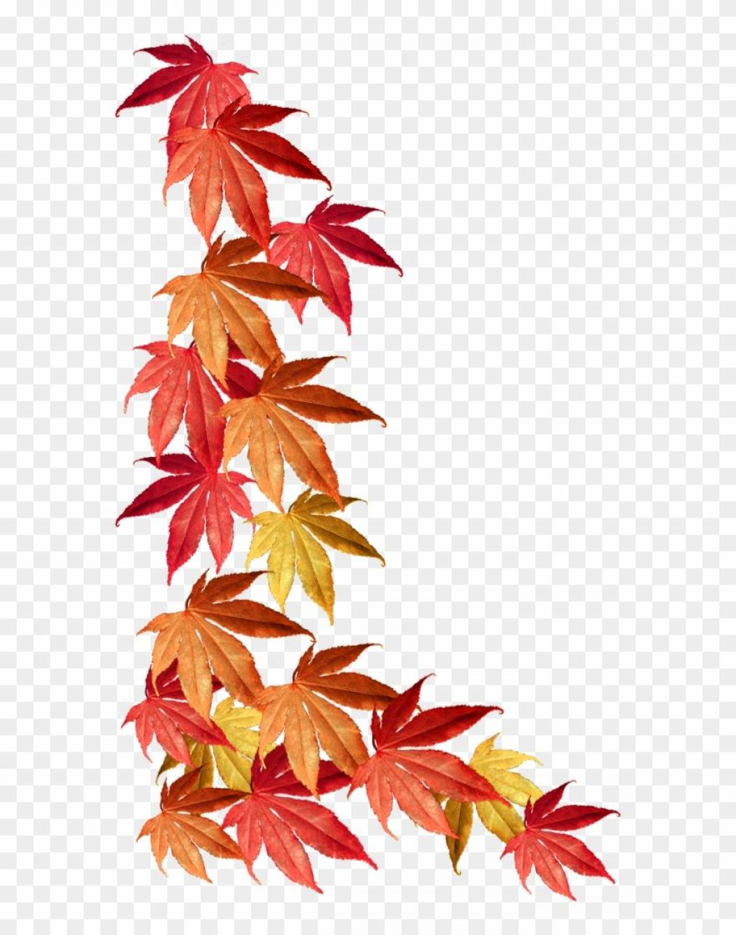Thanksgiving Border Vector: Best Hd Fall Leaf Border Clip Art File Free