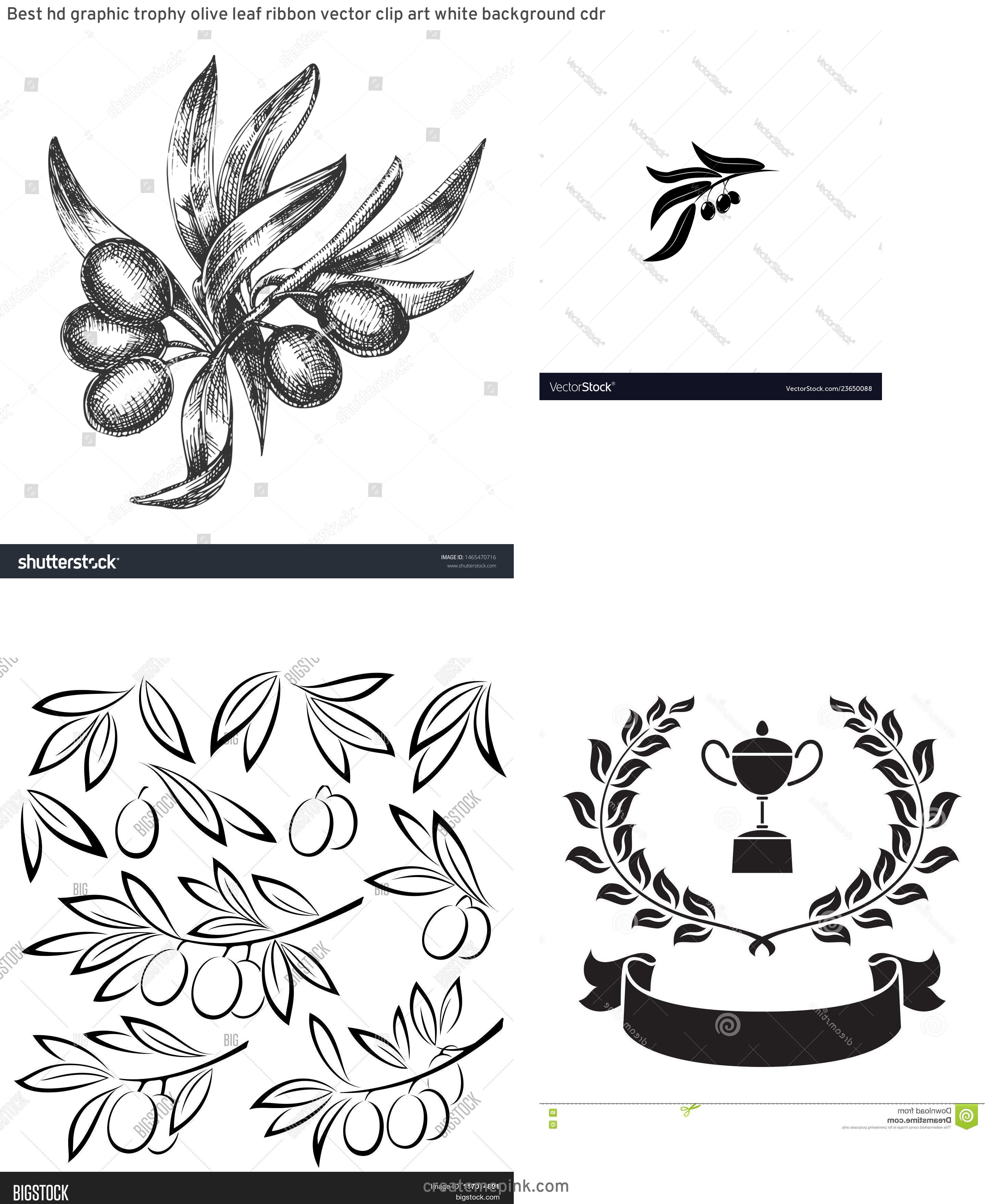 Olive Black And White Vector Leaves: Best Hd Graphic Trophy Olive Leaf Ribbon Vector Clip Art White Background Cdr
