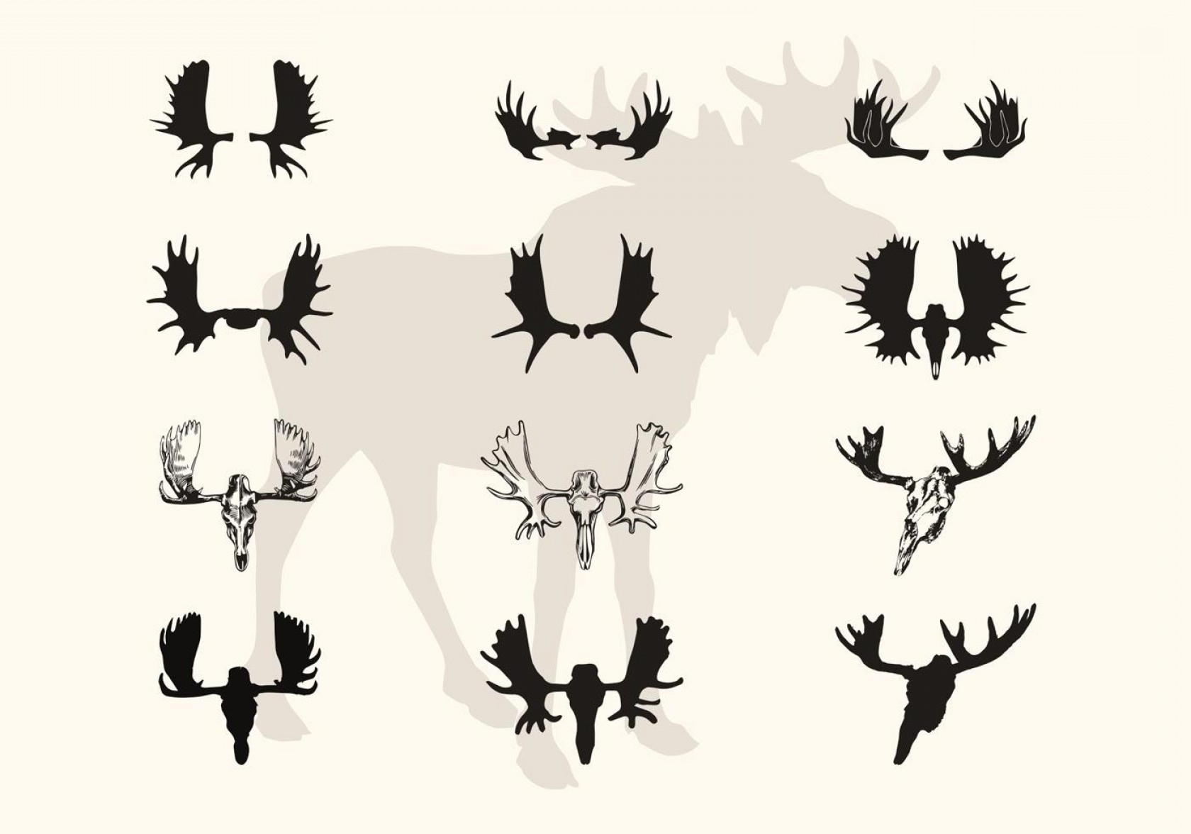 Moose Skull Vector: Best Moose Horns And Skull Vector Silhouettes Photos