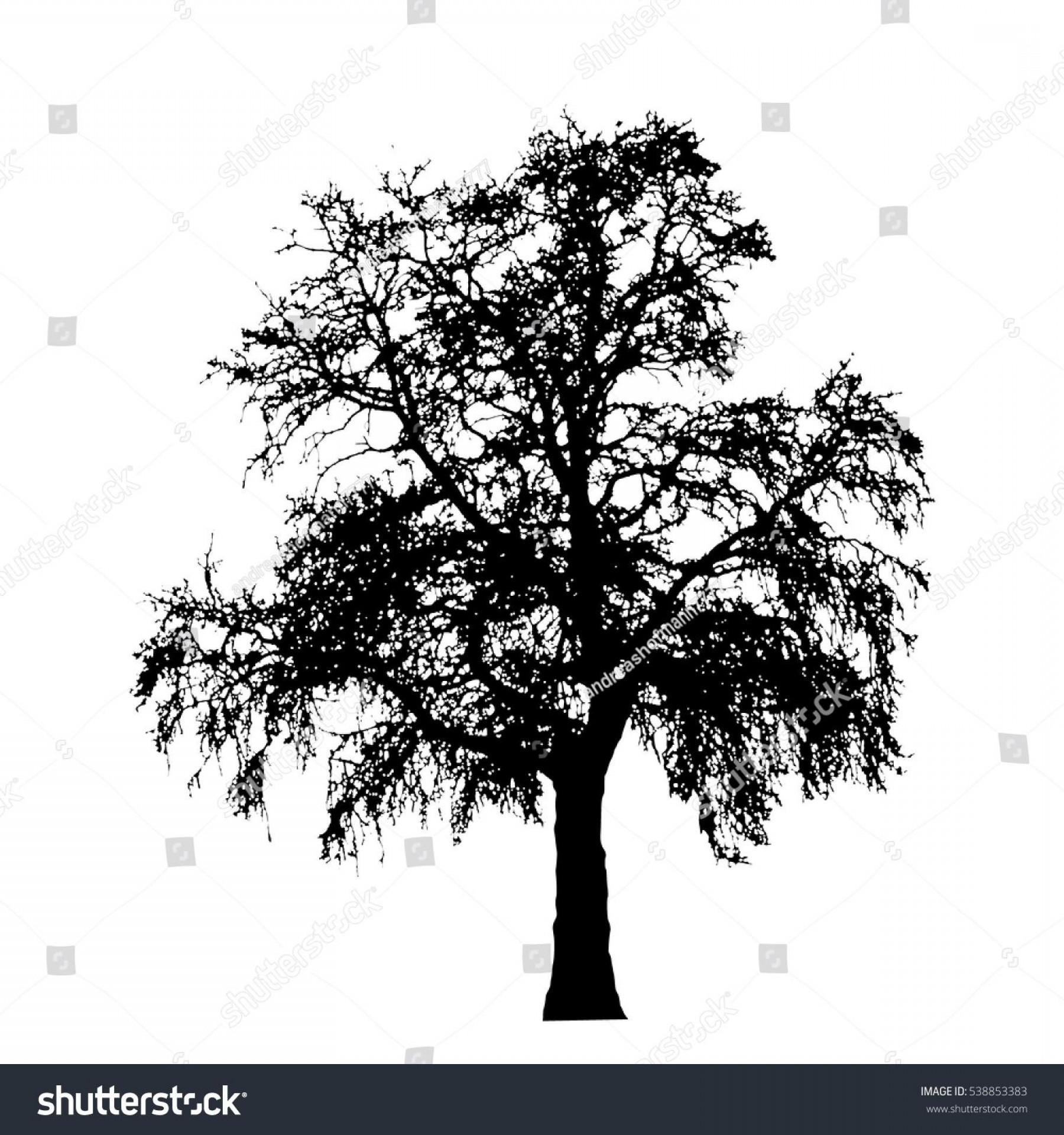 Oak Tree Silhouette Vector Graphics: Best Stock Vector Realistic Oak Tree Silhouette Illustration Eps Drawing