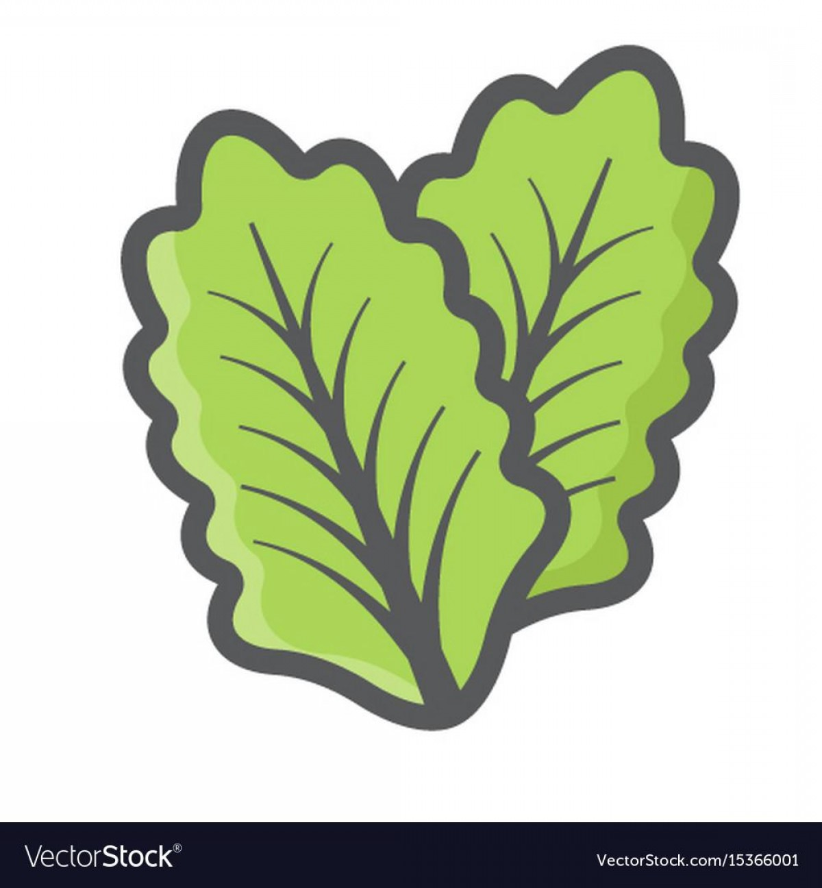 Vector Leaf Graphicd: Best Vector Leaf Lettuce Vector Design
