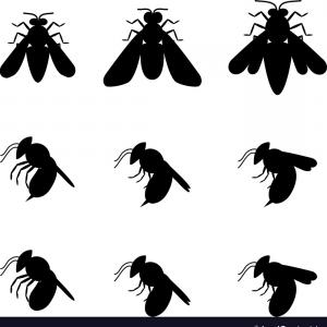 Termites With Wings Vector: Photostock Vector Set Of Flying Butterfly Silhouette Isolated Vector Object