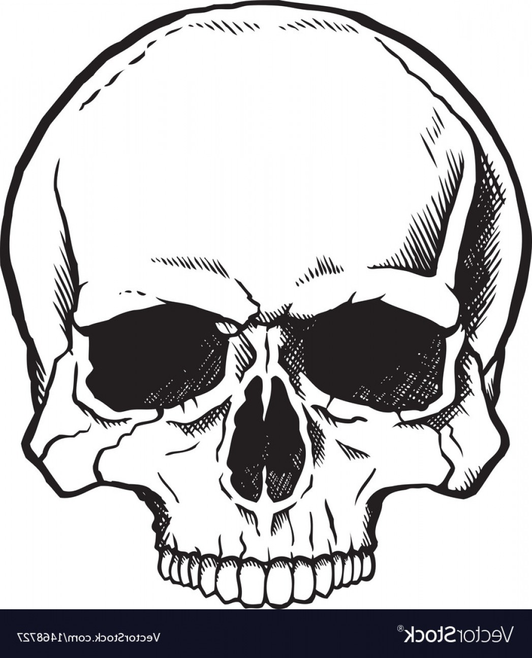 Cool Skull Vector: Black And White Human Skull Vector