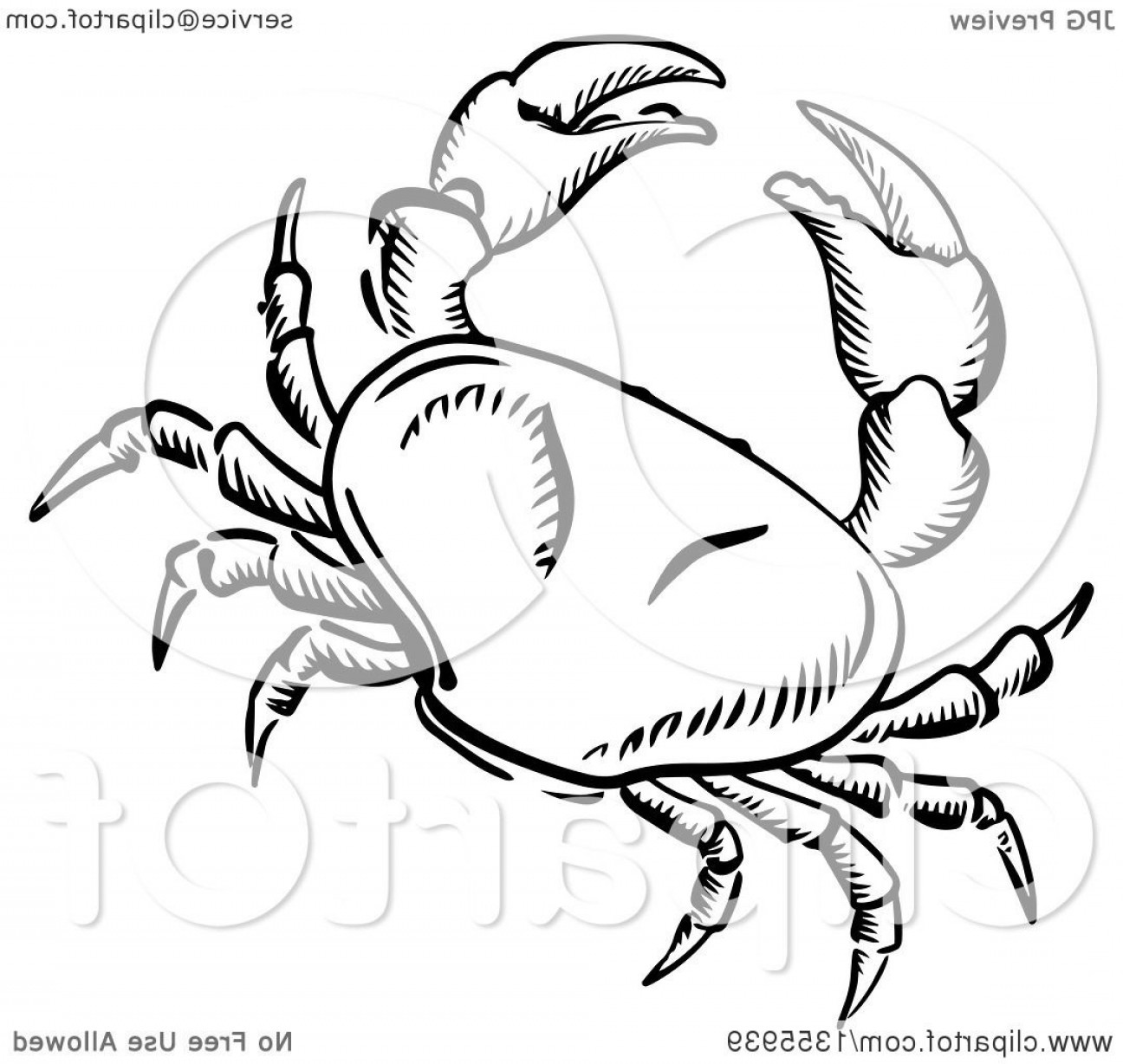 Crab Vector Black: Black And White Sketched Crab