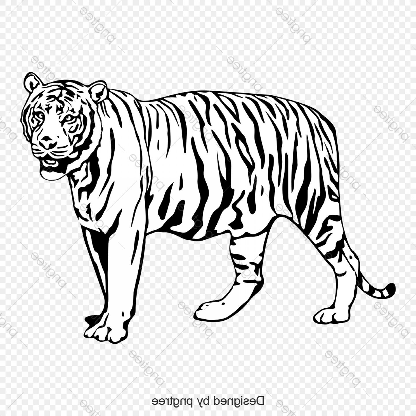 Vector No Wildlife: Black And White Tiger Body Image