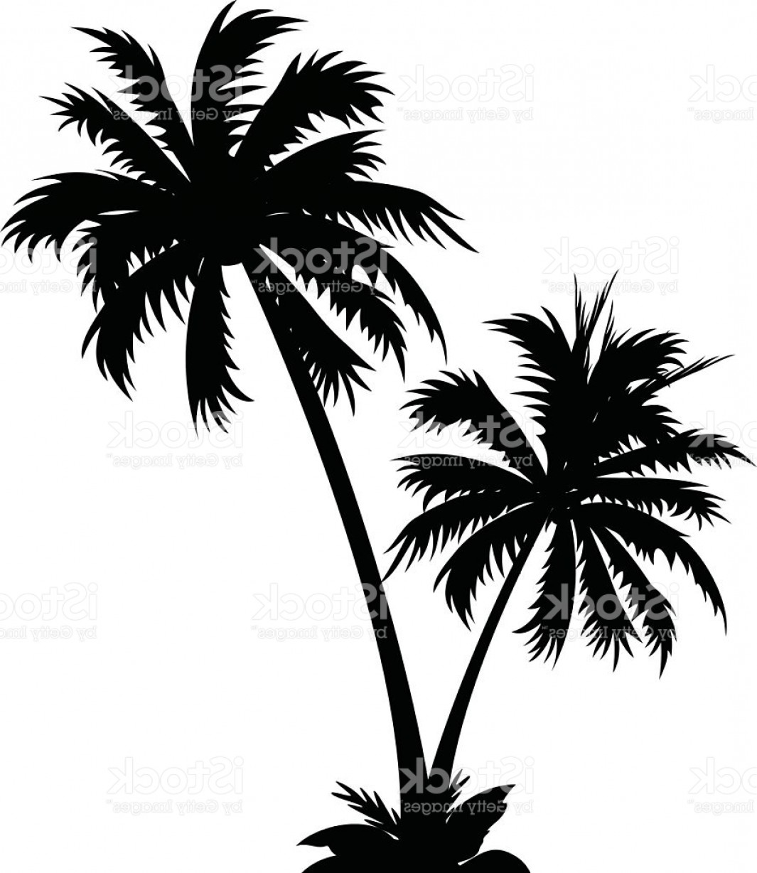 Palm Tree Clip Art Vector: Black And White Vector Icon Of Two Palm Trees Gm