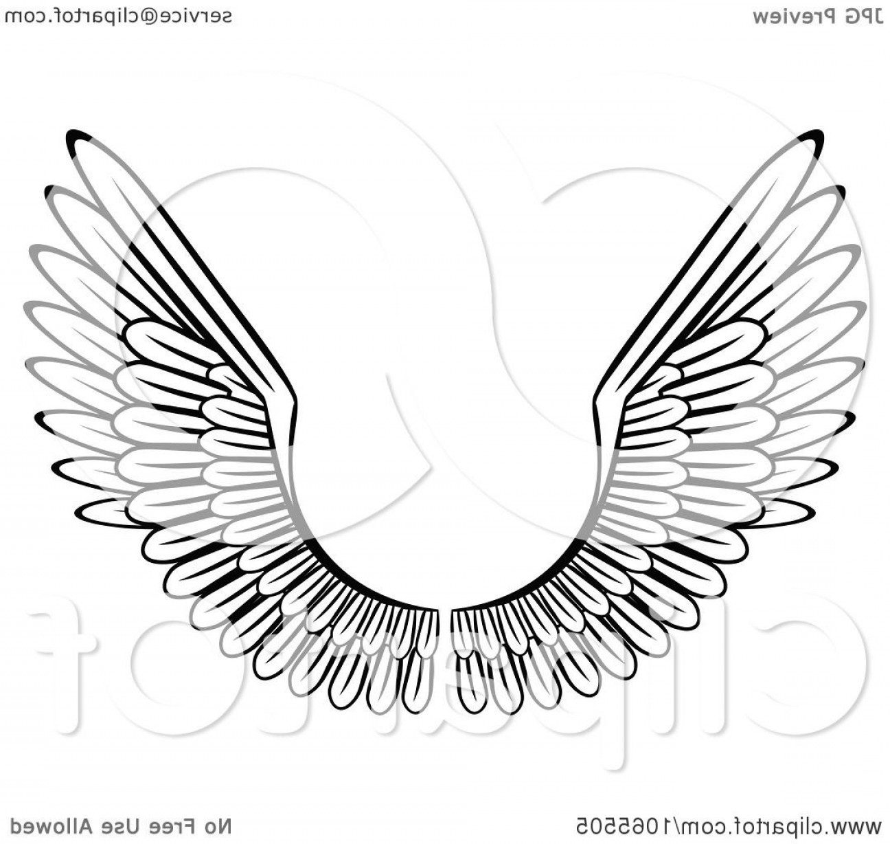 Vector Hi Res Black And White Wing: Black And White Wings