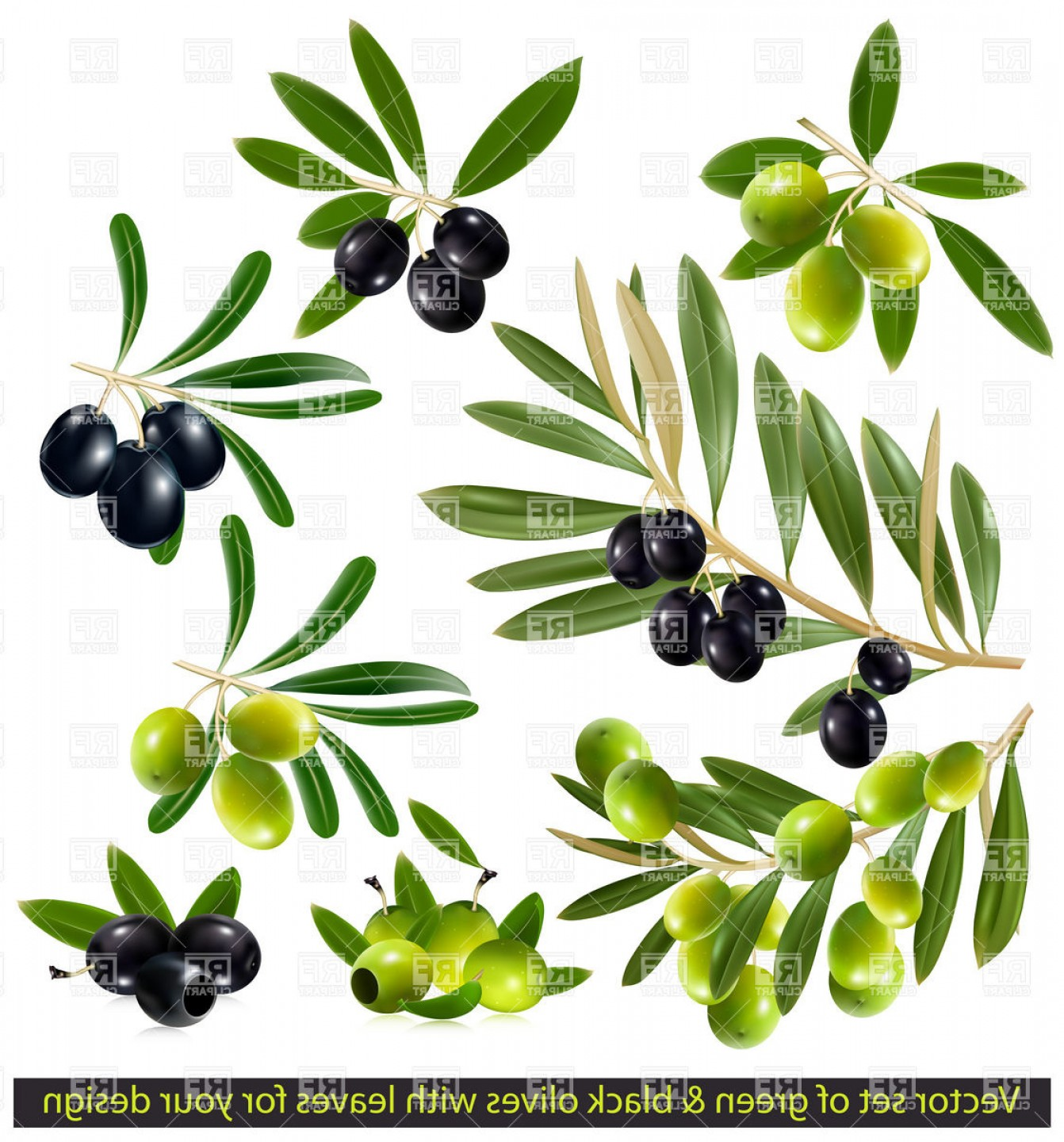 Olive Vector: Black Olive Twig With Leaves Vector Clipart