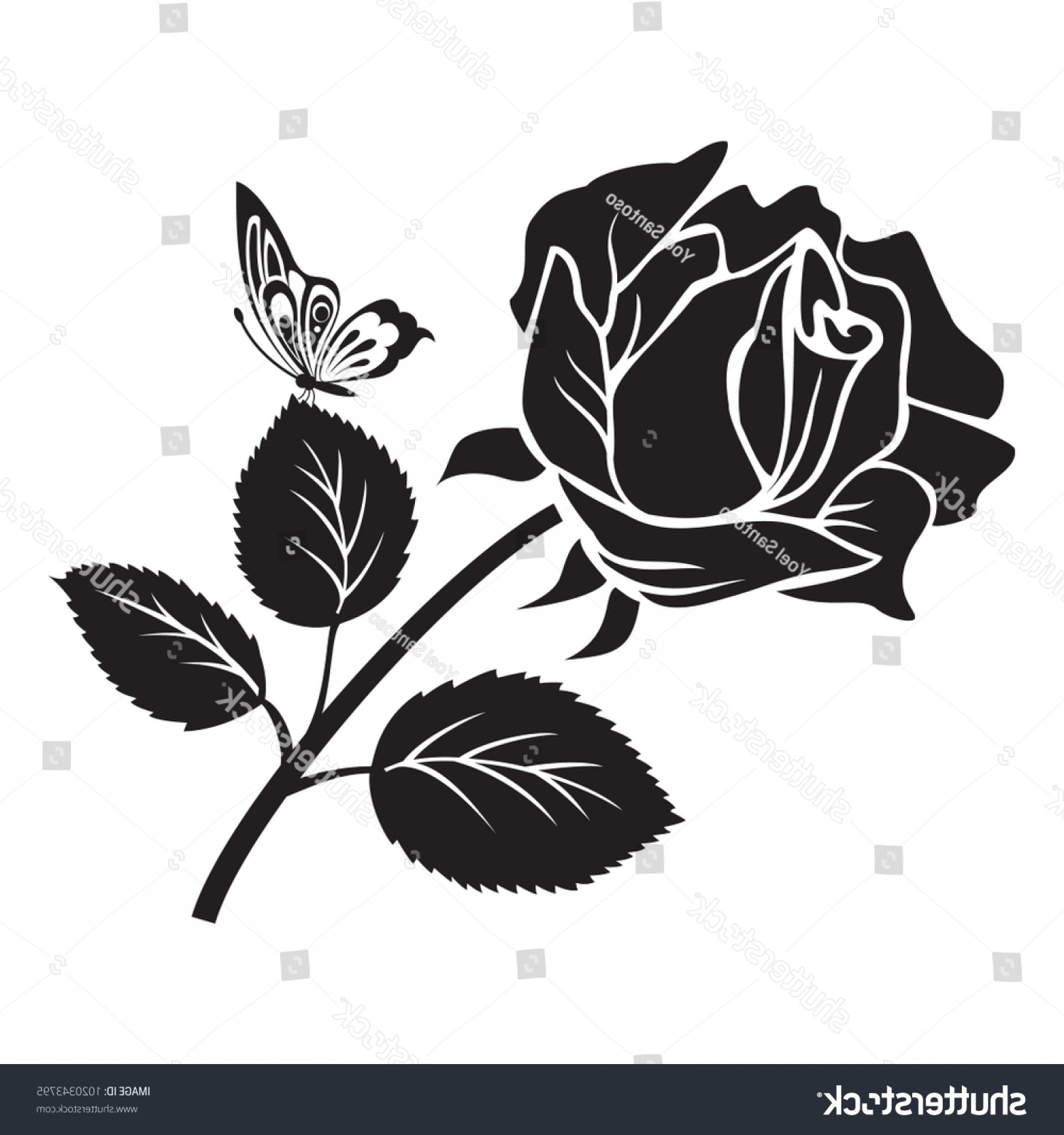 Butter Fly And Flower Vector Black And White: Black Rose Flower Butterfly Vector Illustration