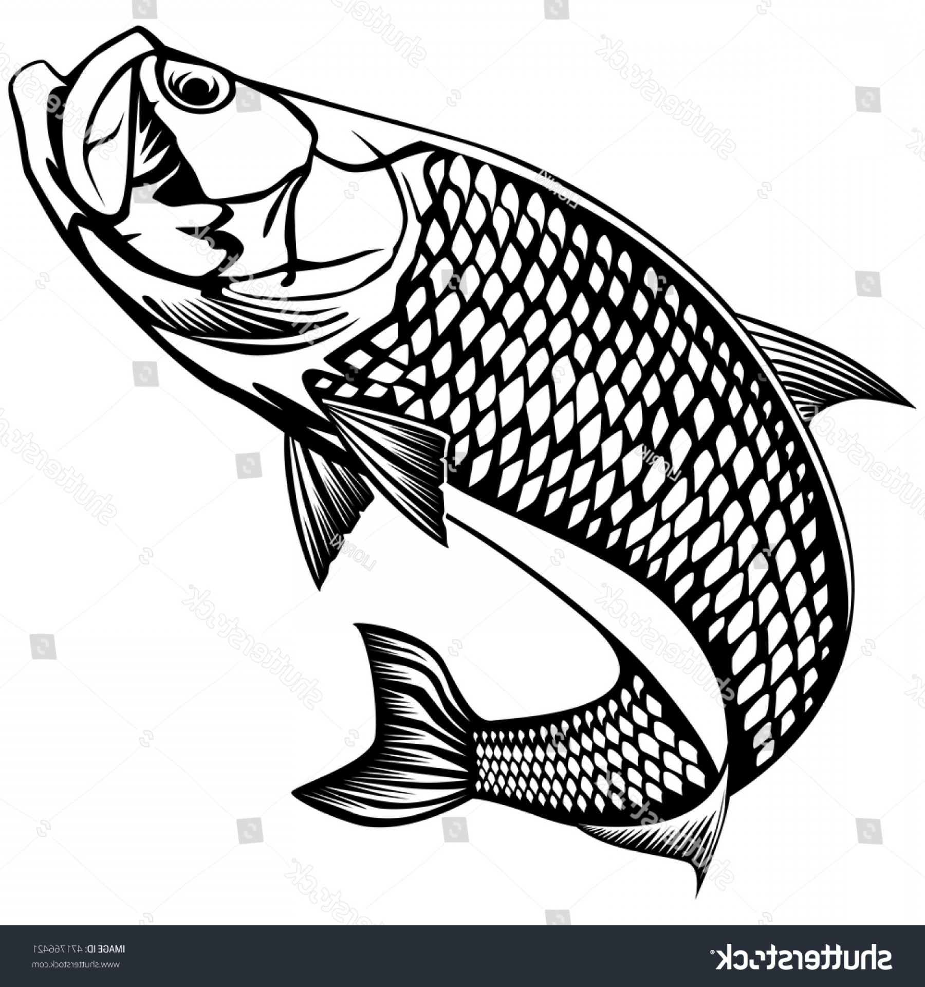 Speckled Trout Vector: Black White Illustration Tarpon Vector Can